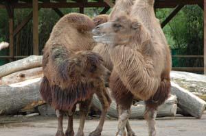 dtomedare-im-zoo