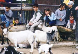 zoo-streichelzoo